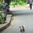 ルアンプラバン 追いかける婆と犬
