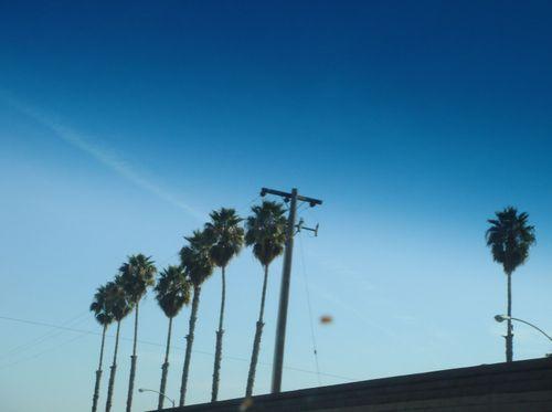 カリフォルニア やしの木