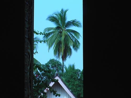 チャンマイ ワットワン 椰子の木