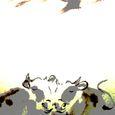 年賀状 牛