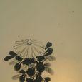 水墨画 菊 - Chrysanthemum -