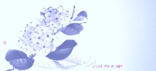 アジサイ図 Hydrangea